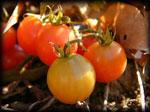 Tomato150